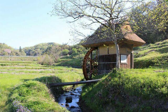 桐の木水車